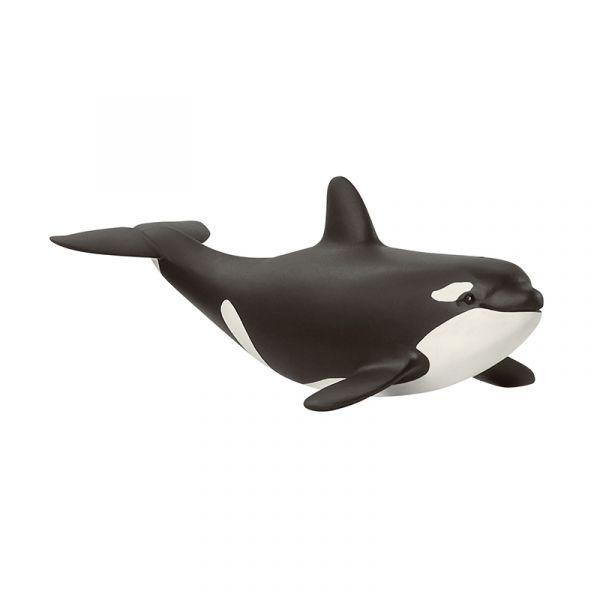 Cá voi sát thủ con