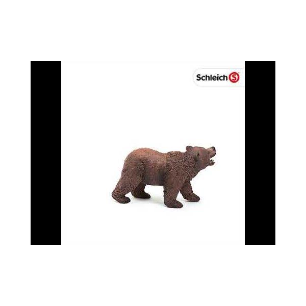 Gấu xám Bắc Mỹ bố