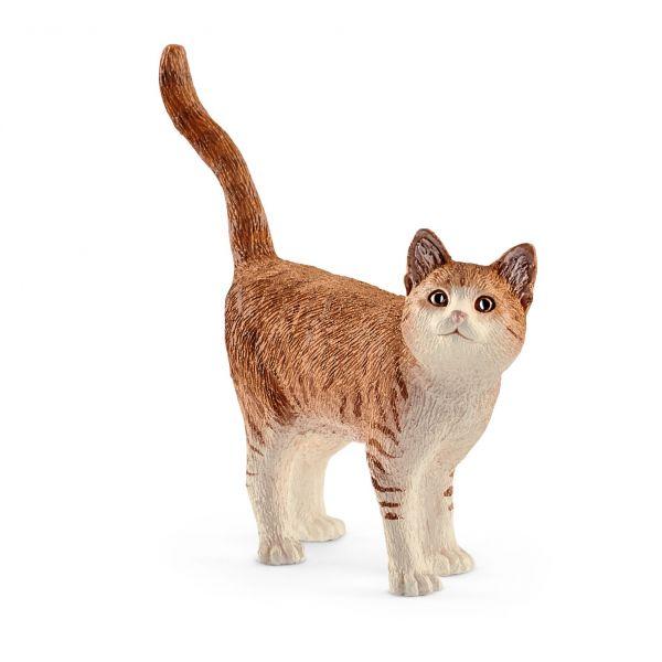 Mèo lông vàng